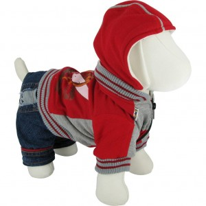 What sort of Dog Clothing to buy?