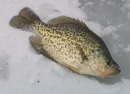 Crappie Ice Fishing: Tips To Follow