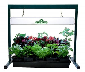 image of a home hydroponics system with grow light