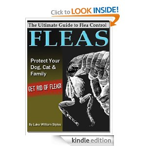 What Are Fleas? How To Tell If Your Pet Has Them